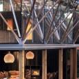 Herbst Architects : maison sous les Pohutukawas