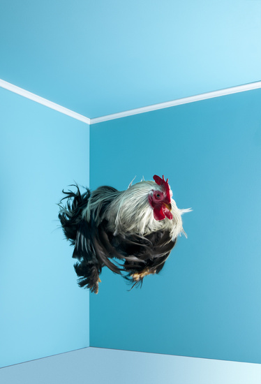 Poultry : an abstract series of images by Mitch Payne